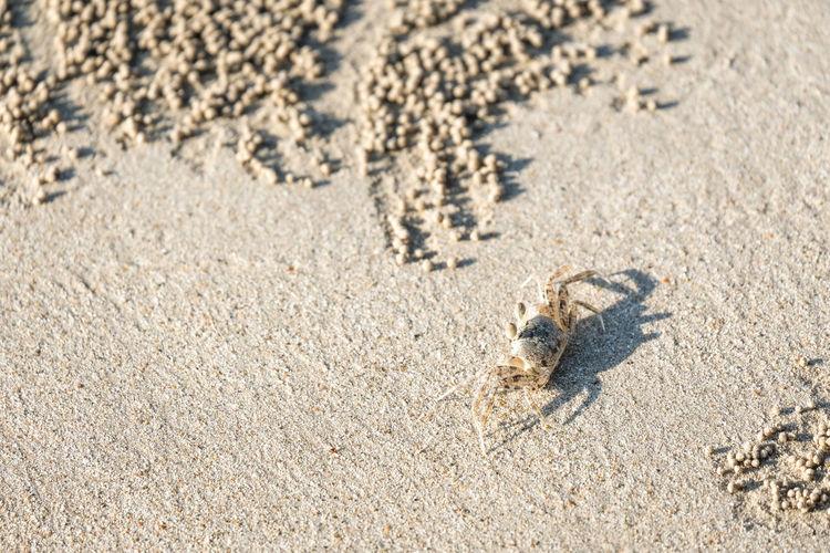 High angle view of small animal on beach
