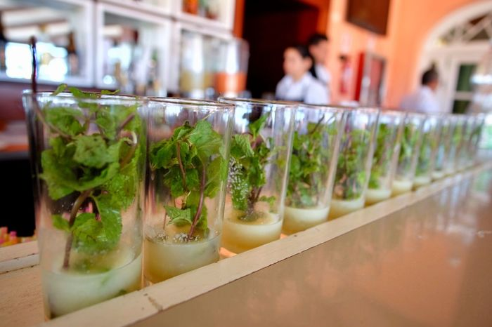 Mojito assembly line, Hotel Ambos Mundos rooftop bar, Havana, Cuba. Mint Glass Hemingway Mundos Ambos Habana Cuba Collection Cuba Havana Mojitos Indoors  In A Row Food And Drink Variation Food Shelf Herb Freshness No People Close-up Day