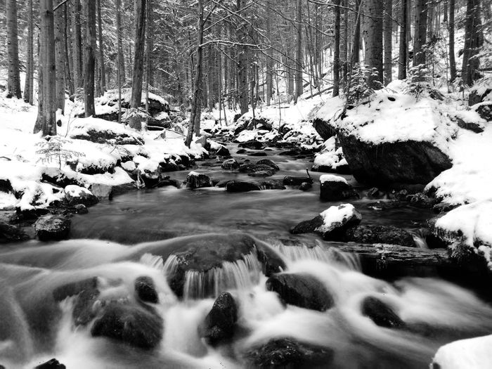 Scenic view of stream in forest during winter