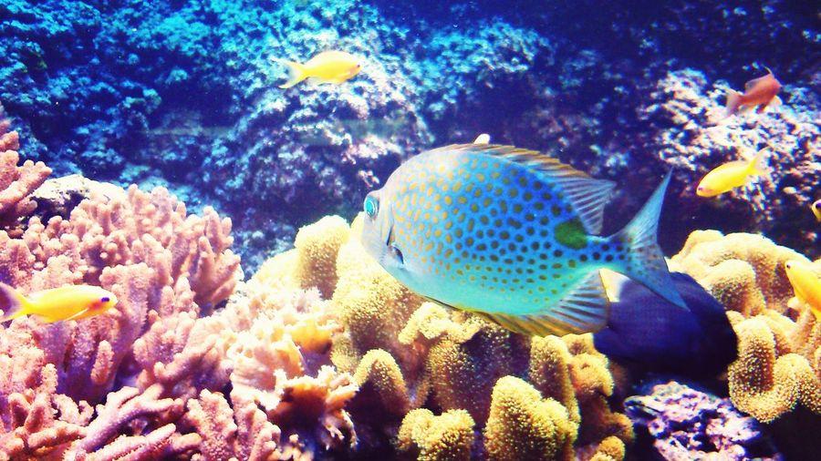 Fish Aquarium Gdynia_port Fotography