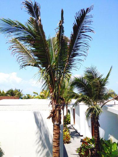 Thailand Palm Tree freedom
