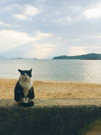 Portrait of cat on beach against sky