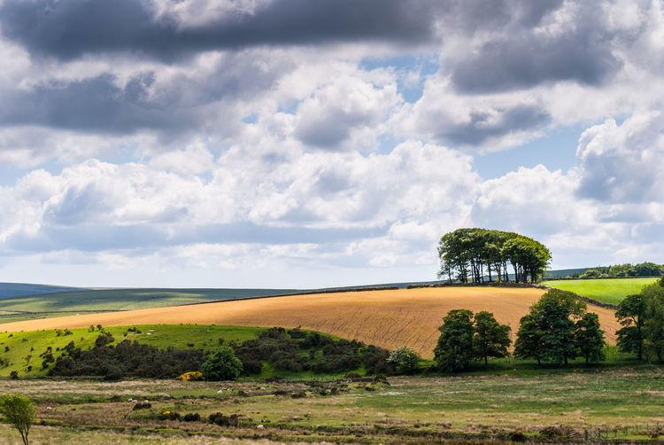 Farmland, UK