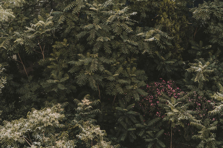 Landscape Photography Travel Beauty In Nature Branch Coniferous Tree Day Flower Flowering Plant Foliage Fragility Freshness Greece Green Color Growth High Angle View Landscape Lifestyles Nature No People Outdoors Plant Summer Tranquility Tree Vulnerability