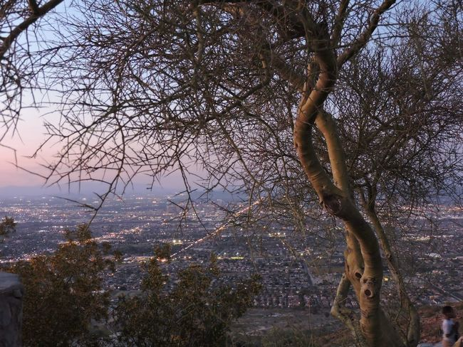 Overlooking Phoenix through trees Tree Growth Nature Branch Beauty In Nature No People Sky Outdoors Tranquility Day