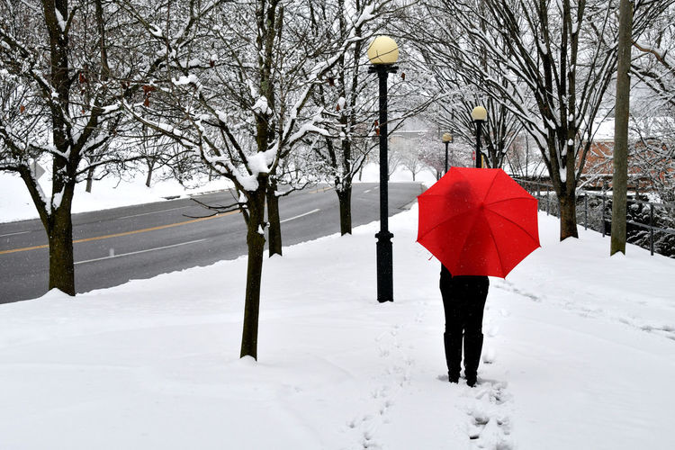 A woman walking through a snow storm by a city street with a red umbrella. Snow Winter Cold Temperature Tree Umbrella One Person Real People Nature White Color Protection Walking Rear View Footpath Lifestyles Day Full Length Bare Tree Warm Clothing Extreme Weather Outdoors Red Umbrella Snowing Snow Storm Red Pop Of Color