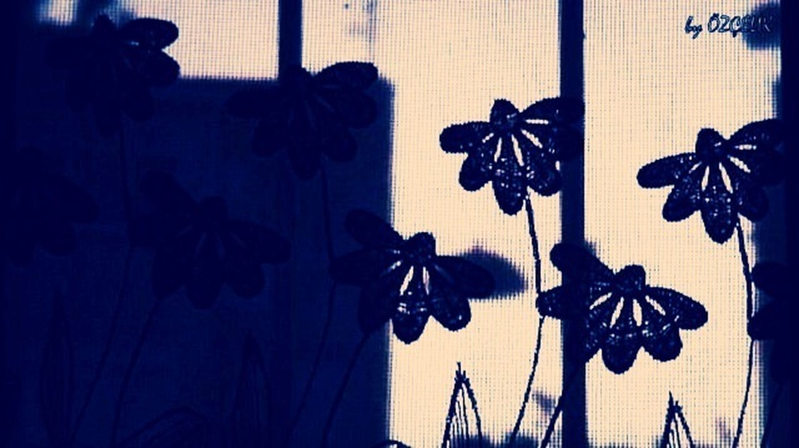 indoors, flower, home interior, shadow, wall - building feature, close-up, plant, leaf, window, potted plant, growth, wall, sunlight, focus on foreground, no people, vase, decoration, petal, fragility, stem