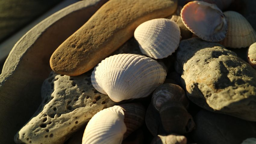 EyeEm Selects Close-up No People Sunlight Land Nature Day Beach Shell