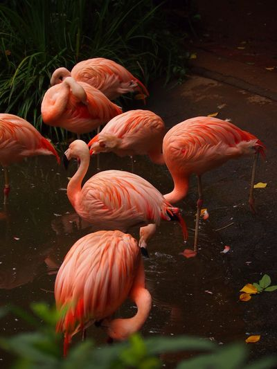 High angle view of flamingos