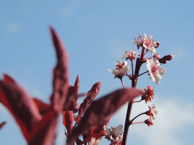 Nature Red Beauty In Nature Blossom Blue Flower Flowering Plant Nature_collection Sky