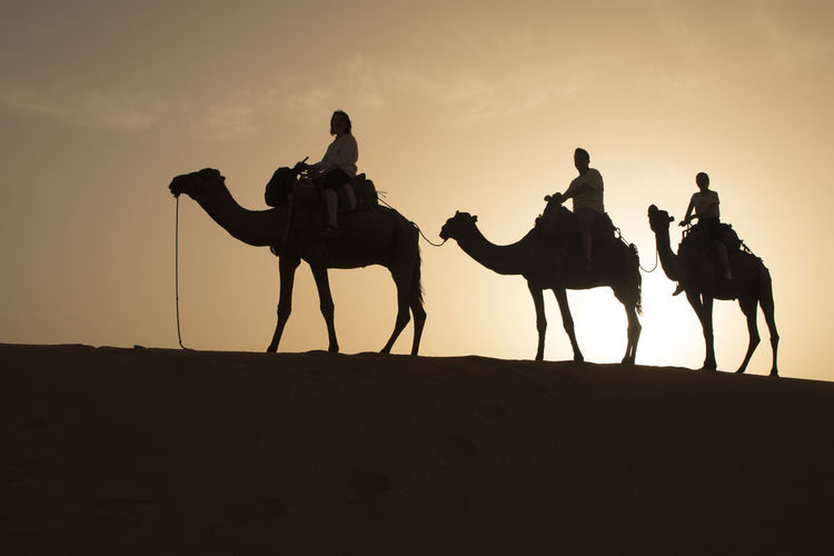 Silhouette People On Camels At Desert Against Sky During Sunset
