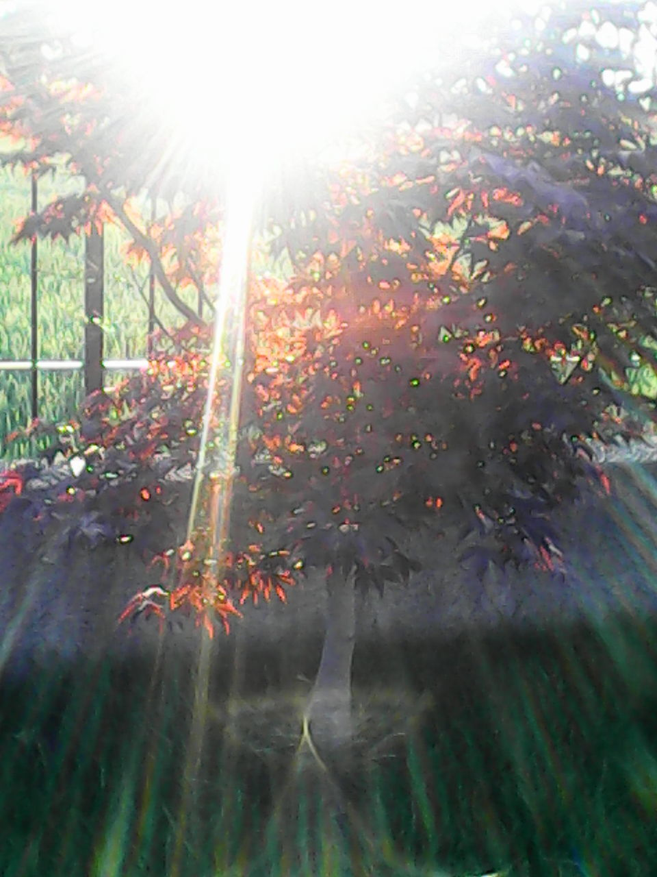 tree, sunlight, nature, no people, growth, autumn, day, outdoors, leaf, beauty in nature, plant, grass, close-up, sky