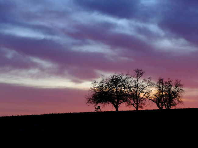 Big Sky Cloud - Sky Landscape No People Outdoors Pink Clouds At Sunset Pink Skys Scenics Silhouette Sunrise Tranquil Scene Tree Silhouettes Violet Clouds
