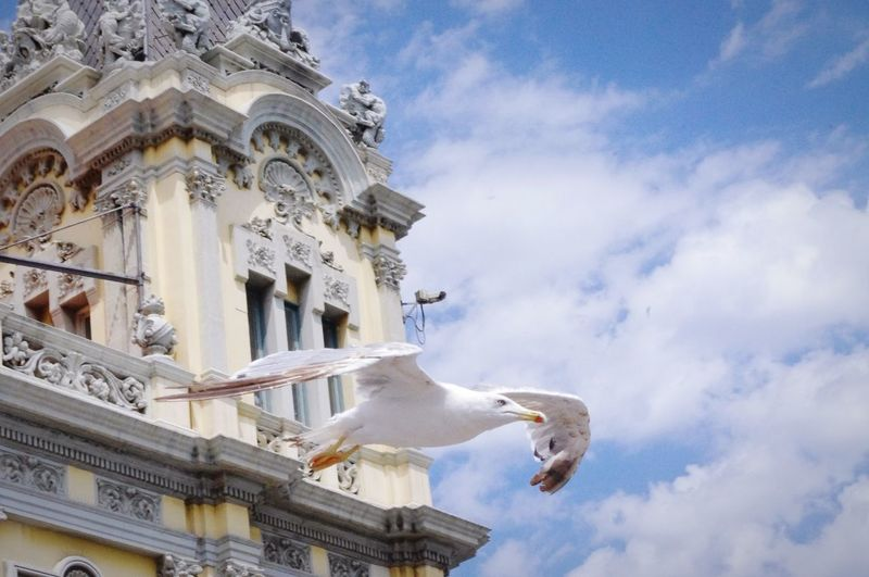 """""""Hi how are you bye"""" (Larus michahellis) Seagulls Barcelona Blue Sky New To This  Getting Inspired"""
