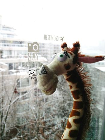 Close-up Giraffe Fun Fun Photography Snow Oneplustwo No People Here We Go
