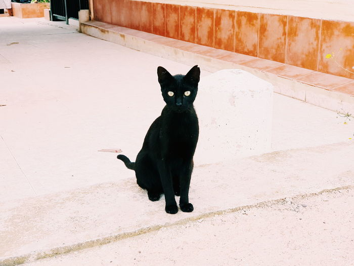 Portrait of black cat sitting on wall
