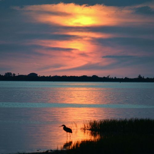 Sunset_collection Birdwatching Hanging Out United States Florida Digitalu Relaxing Reflection 43 Golden Moments Hidden Gems  Bokeelia Swflorida Swfl Seascape Beauty In Nature Tranquil Scene Outdoors Coastline Nature Cloud - Sky Water Scenics Sky