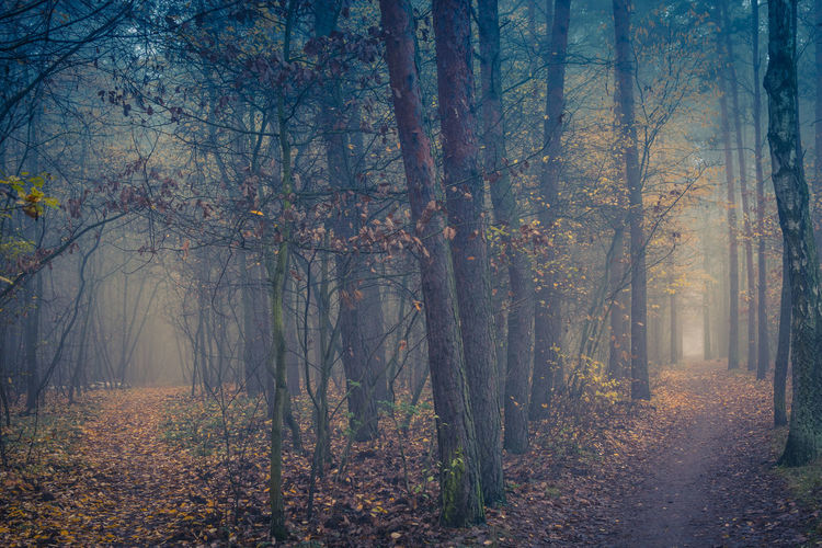 Autumn Autumn Collection Beauty In Nature Environment Fog Forest Land Landscape Leaf Nature No People Outdoors Tranquility Tree WoodLand