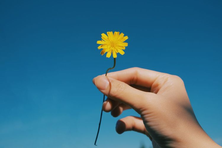 Close-up of hand holding yellow flower against blue sky