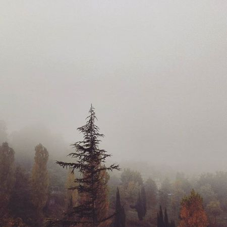 Un po' mi manca la tua nebbia . . Urbino Montefeltro Nebbia Fog Foggy Mistyfoggymilkymoody Misty Mistyday Trees Leaves Naturelovers Natura Nature Fall Fallcolors Autumn Autunno  IGDaily Marche Marcheforyou Italia Italy Liveloveitaly Igersitalia Igersmarche landscape