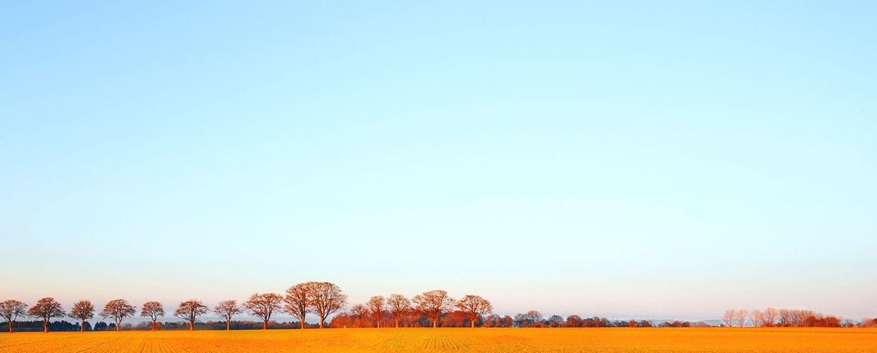 - GOLDEN DELICIOUS - Taking Photos Nature Outdoors Nature Photography EyeEm Nature Lover Minimalism Minimal Autumn Agriculture Landscape Walking Around Hanging Out Field N \ VEA ★ CREME Showcase: November Things I Like The Great Outdoors With Adobe Exploring Style Betterlandscapes