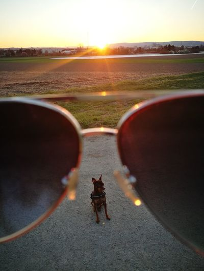 Sunset Outdoors No People Huawei P9 Leica Sunshine ☀ Sunglasess Dogs Of EyeEm Nature No Filter, No Edit, Just Photography
