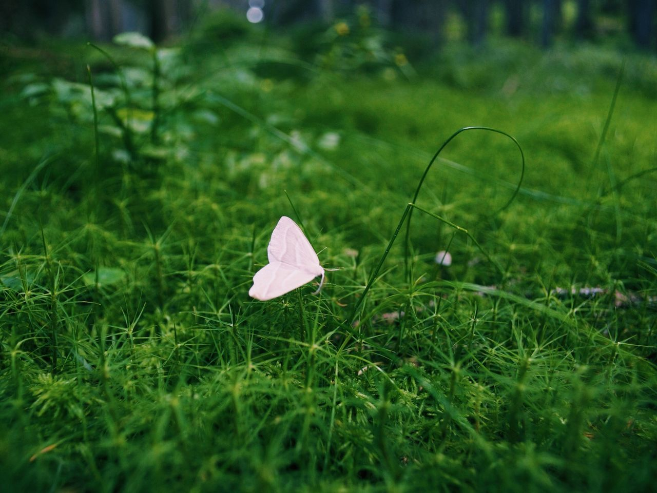 Pink butterfly on grass