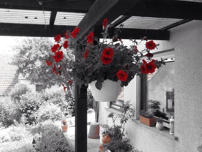 Flowers Blumen Taking Photos Bayern Franken Franconia Bavaria F/X Canon PowerShot SX130IS