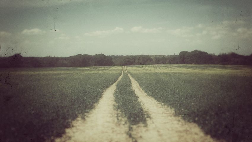 Path, feild, journey, crops, sun