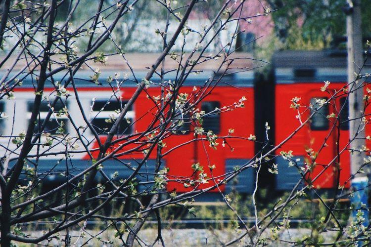 Train Train Station Road Way Tree Raliway Raliwaytrack Carriage Rails