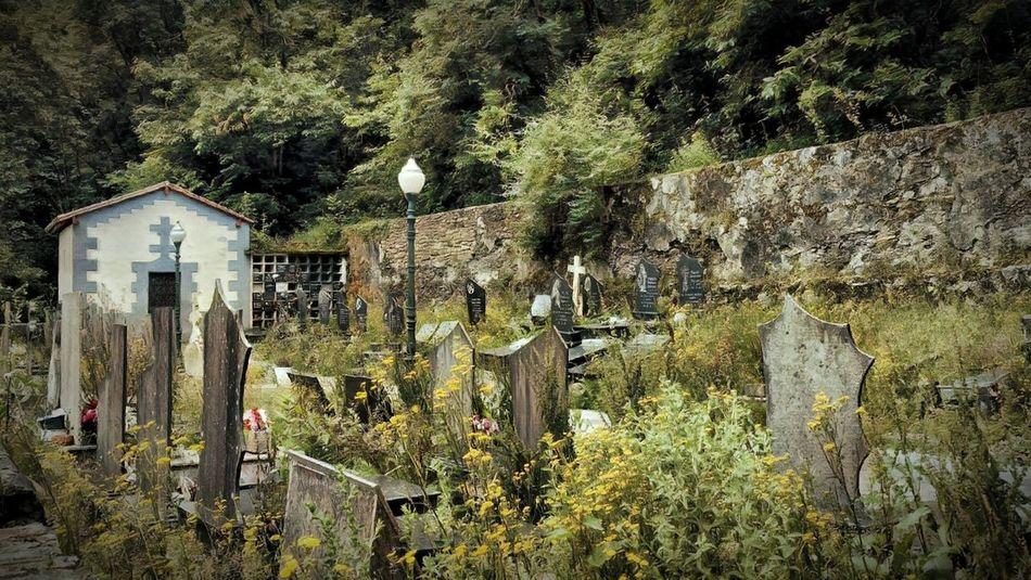 Cementerio El Regato Barakaldo Euskalherria Cemetery Hilerria Plant Tree Growth Day Architecture No People Nature