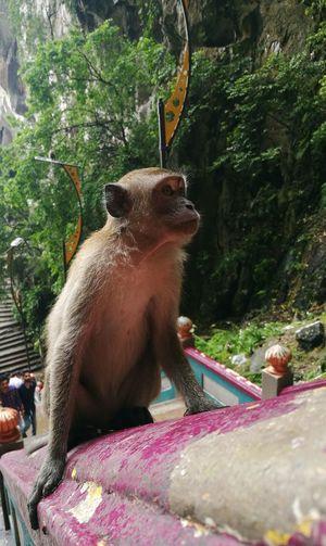 Monkey Close-up Animal God Creation Stare Away  Animal Photography Animal Behavior Watching