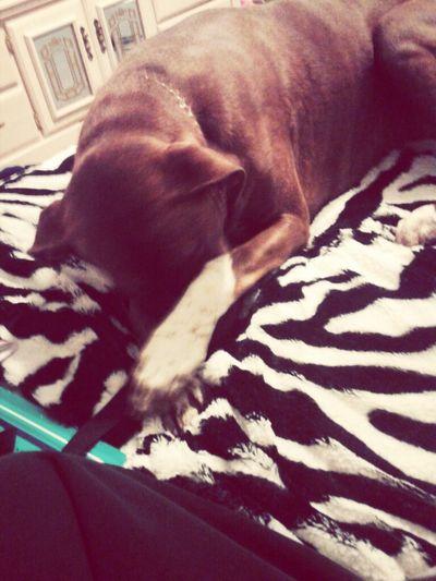 Puppy; cuteness