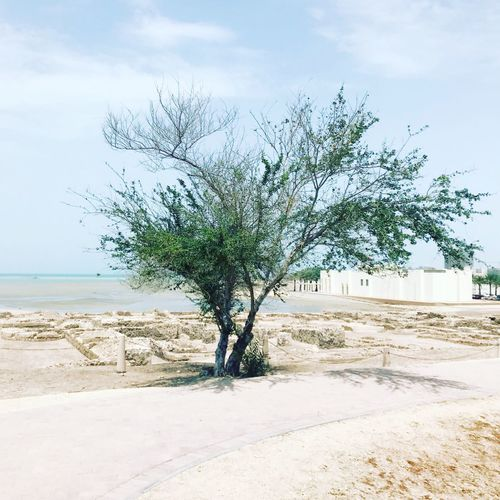 Desert tree Sky Plant Water Sea Beach Beauty In Nature Nature