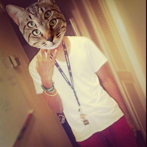 Being Cat-astical Lls