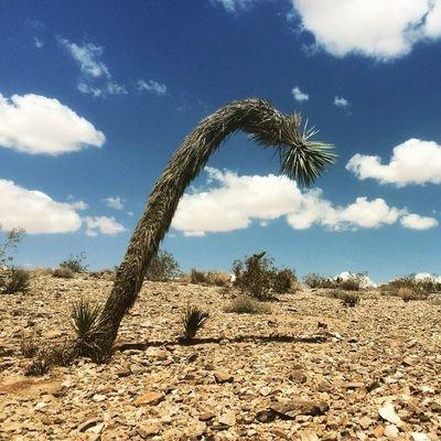 Desert near Joshua Tree National Park