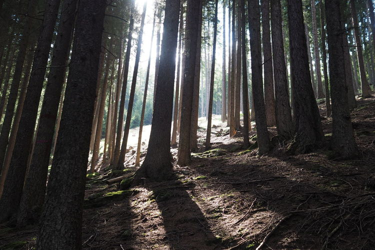 Sunlight in the deep forest Copy Space Hiking Sunlight Beauty In Nature Day Forest Growth Hikingadventures Landscape Nature No People Outdoors Scenics Tranquil Scene Tranquility Tree Tree Trunk Wilderness