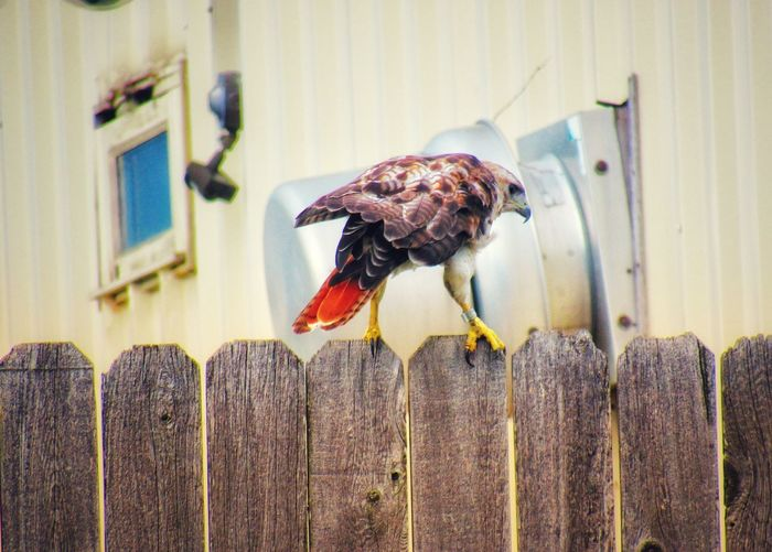 Close-up of bird perched on wooden fence