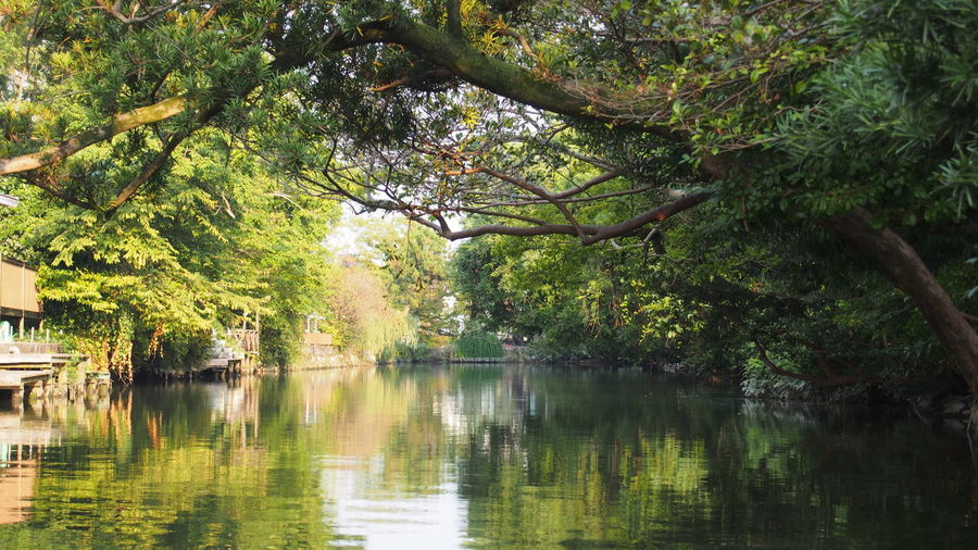 Beauty In Nature Boating Branch Calm Canal Day Green Color Growth EyeEm Best Shots Lake Majestic Nature No People Outdoors Park - Man Made Space Plant Reflection Remote Scenics Tranquil Scene Tree Tree Trunk Water 川下り 柳川