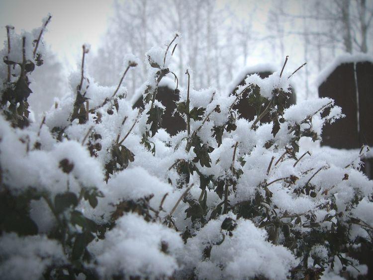 Finland Black & White B&w Winter Snow