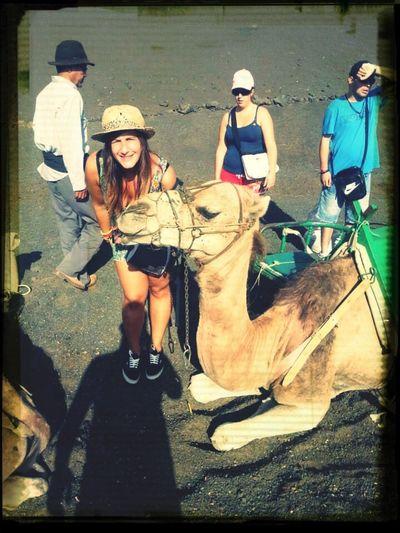 Lanzarote Island Timanfaya Camello