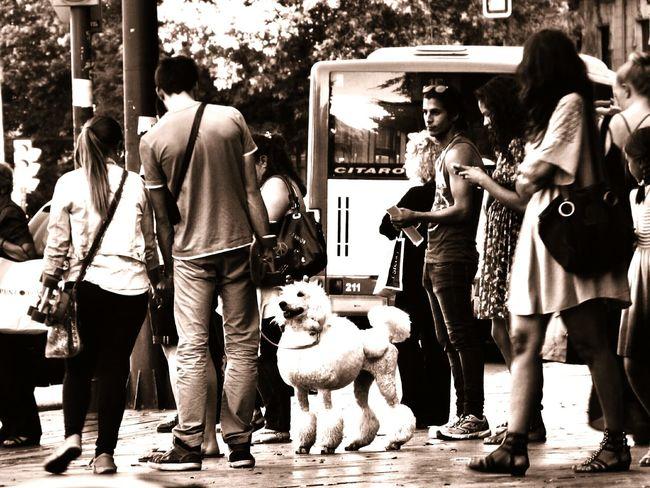 Streetphotography in Palma de Mallorca Taking Photos Blackandwhite Monochrome Dogs