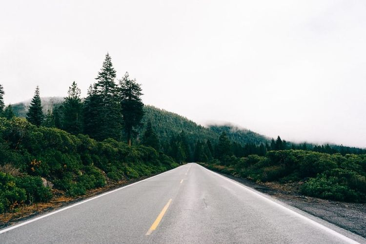 Asphalt Day Forest Highway Landscape Nature No People Outdoors Road Sky The Way Forward Transportation Tree Winding Road