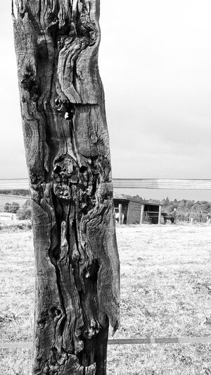 Historical age Blackandwhite Photography Blackandwhite Black & White Tree Stumps Holz Wood Bois Drills Gallows Nature Old Outdoors Perçages Rough Textured  Vertical Photography OldWood-material No Tree Trunk