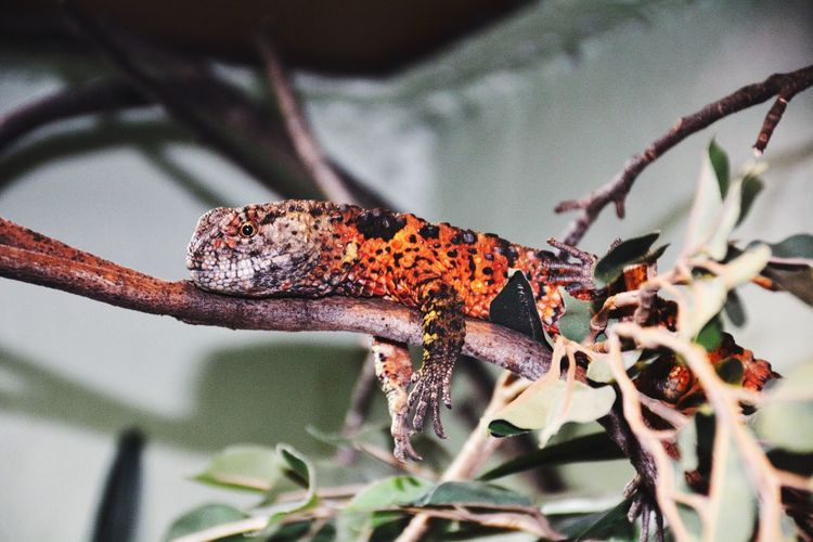Animal Wildlife Animals In The Wild Animal Themes Animal One Animal Insect Branch Nature Close-up Selective Focus