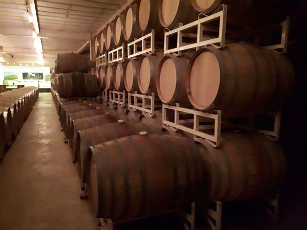 entre barricas EyeEm Selects Wine Cask Keg Barrel Cellar Alcohol Warehouse Wine Winemaking Winery Drink Distillation