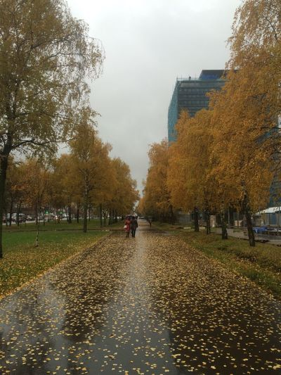 Man walking in park during autumn