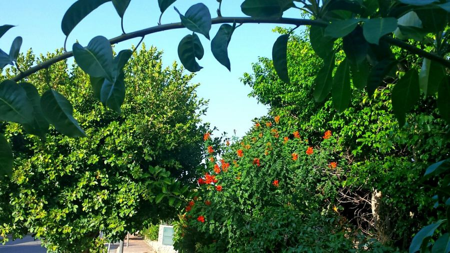 Flowers Bushes Green Green Green!  Blue Sky Naturally Framed Mediterranean Nature Nature_collection Beliebte Fotos Green Nature Red Blossom