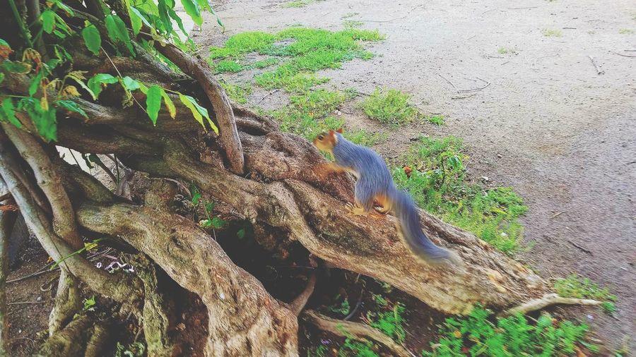 High angle view of lizard on tree