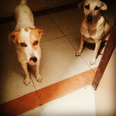 They never miss their post dinner snacks... Doglover Dogfood Petlover Pgicampus Pgimer Pgi Dmlife